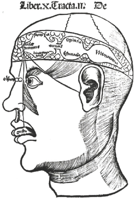 Figure 7: The flawed medieval ventricular doctrine. The belief was that inputs from the nose, tongue, eye, and ear go to the first ventricle which houses common sense, fantasy, and imagination. The second ventricle contains thought and judgment; memory is in the third ventricle.
